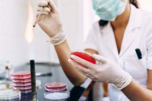 Biologie analytique et expérimentale : parcours microbiologie